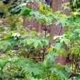 seeds trees