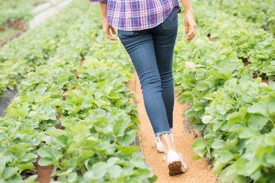 pessoa caminhando por uma horta
