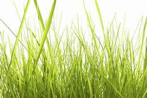 Obraz znaleziony dla: wysoka trawa