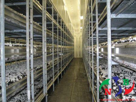 Yêu cầu về lắp đặt và sử dụng kho lạnh bảo quản nấm