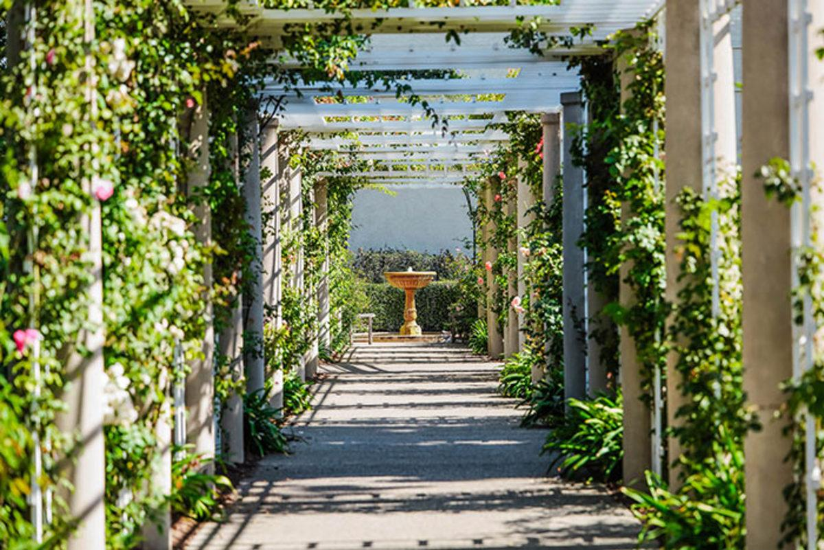 pathway with climbing plants hortmag