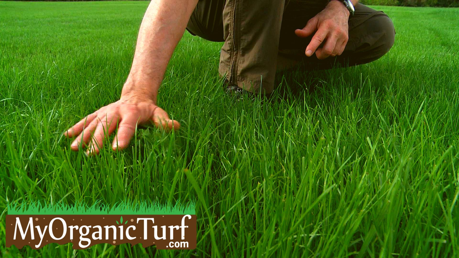 Lawn grass assessment by My Organic Turf
