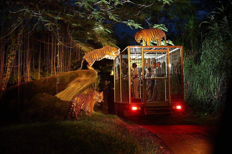 Night Safari in bus
