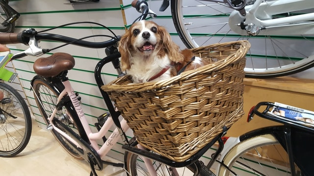 dog basket for a bike with a cute yellow dog