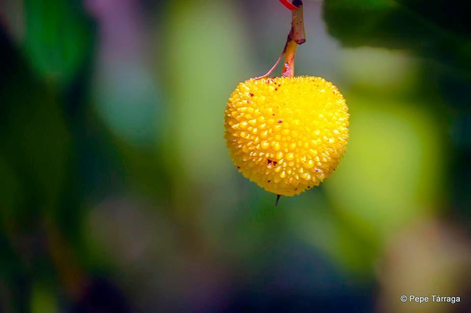 La imagen puede contener: planta, flor, texto y naturaleza