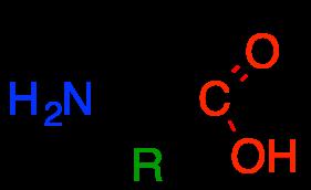 Structure des acides alpha aminés