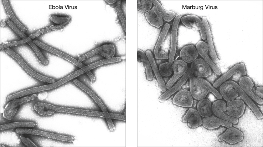 marburg-ebola.png