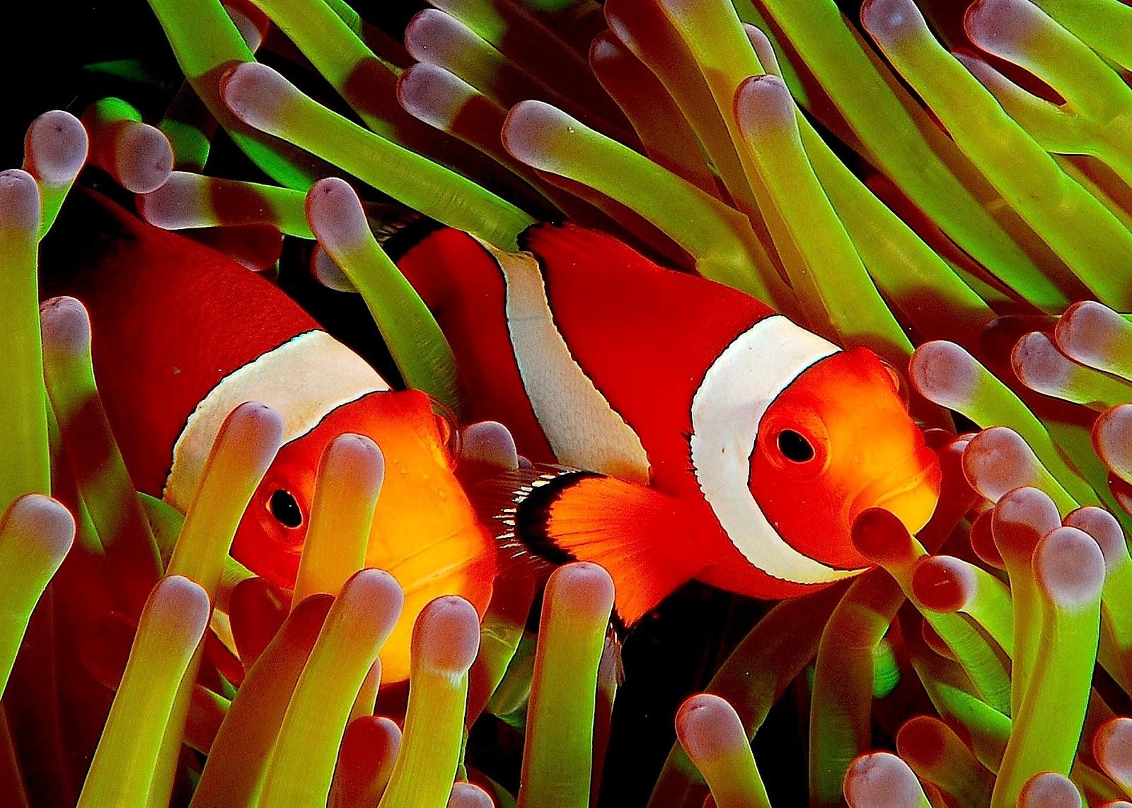 Coral reef fish - Wikipedia