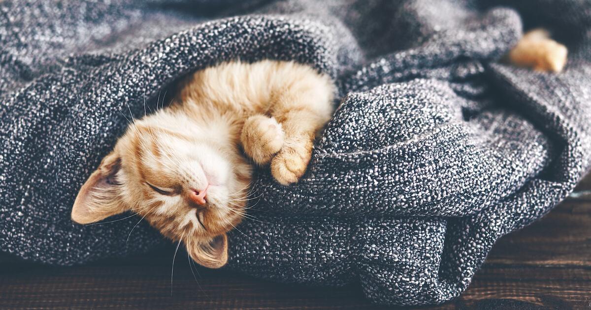 la journée mondiale du chat est l'occasion de s'assurer que son chat va bien !