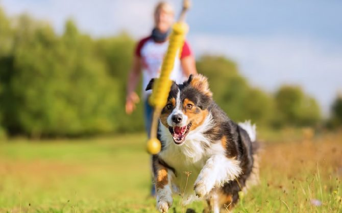Image result for dog with toy stock image