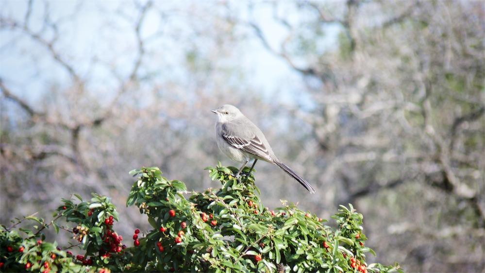 Bird In Sun.jpg
