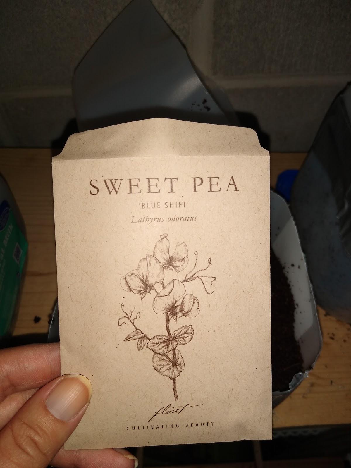 winter sowing sweet peas