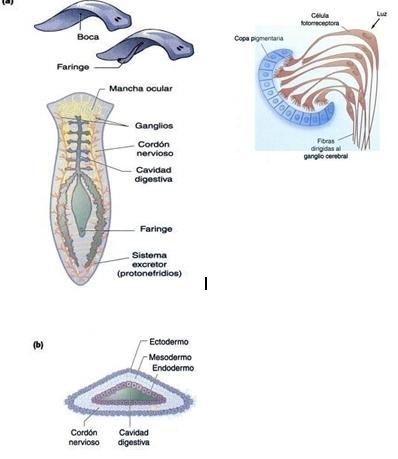 Saira G. M. Cuaderno de Biologia 518: Practica 1: Patrones del ...
