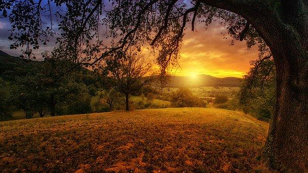 Nature, Tree, Dawn, Landscape, Panorama