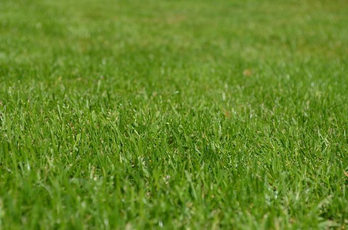 perfect lawn.jpeg
