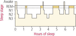 sleep-architecture.jpg