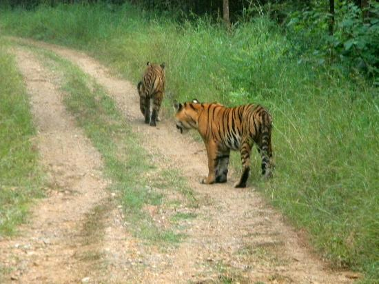 Nagzira Wildlife Sanctuary Nagpur