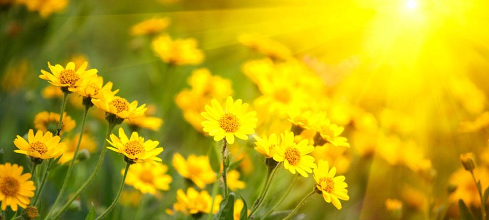 Image Result For Spring Time