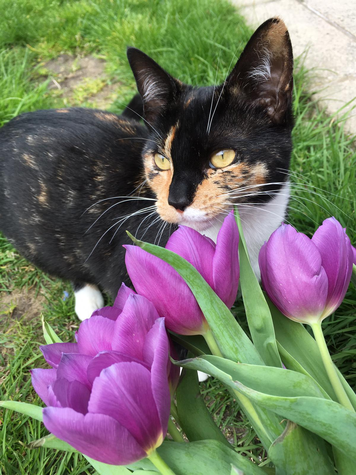 RSPCA appealing for information after cat died after being