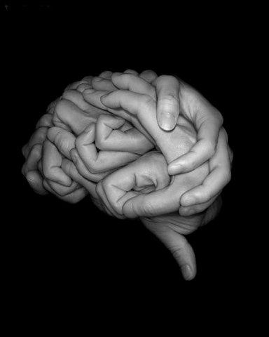 cerebro02