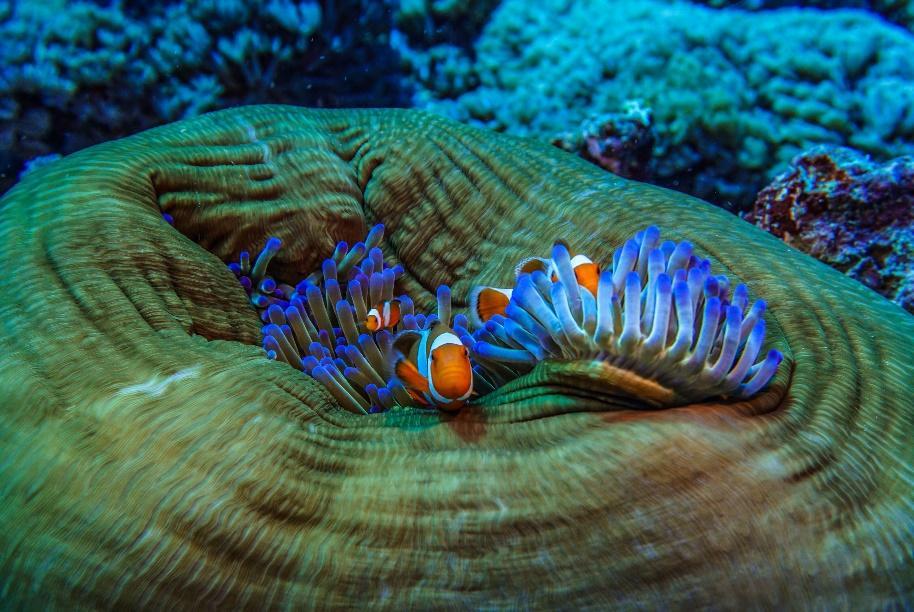 gili trawangan Corals