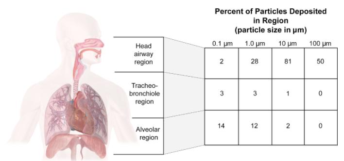 Porcentagem das partículas depositadas por região. As três áreas destacadas são: região da cabeça, região traqueobrônquica e região alveolar. Fonte: COMMENTARY: Ebola virus transmission via contact and aerosol — a new paradigm. Rachael M Jones, PhD, and Lisa M Brosseau, ScD