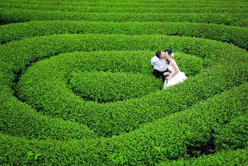 Mộc Châu    thung lũng mặt trời, nơi tình yêu dẫn lối