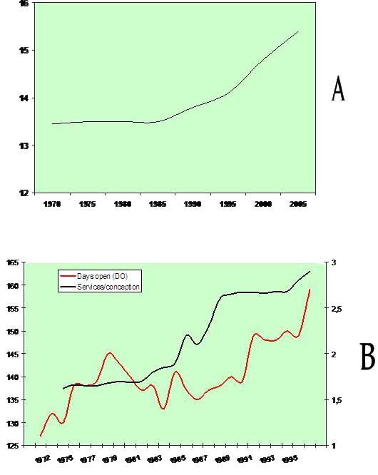 Average calving interval in American Holstein cows for the period 1970–2005 (Source: Oltenacu & Algers, Ambio 34, 2005, www.ambio.kva.se, ). Changes in days open (DO) and services per conception in 73 Holstein herds in Kentucky, USA 1972–1996 (modified from Silvia WJ, J Dairy Sci 81, Suppl 1, 2003, ).
