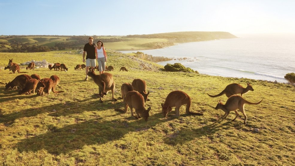 For the animal lover: Kangaroo Island