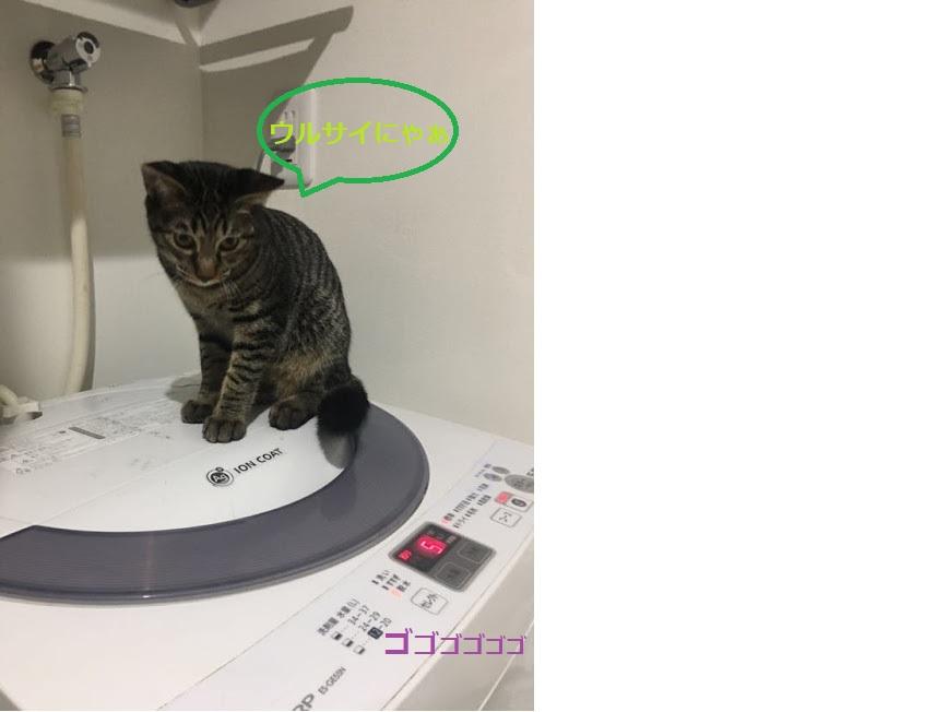 可愛いww猫がキーボードに乗ってくるのはなぜ?