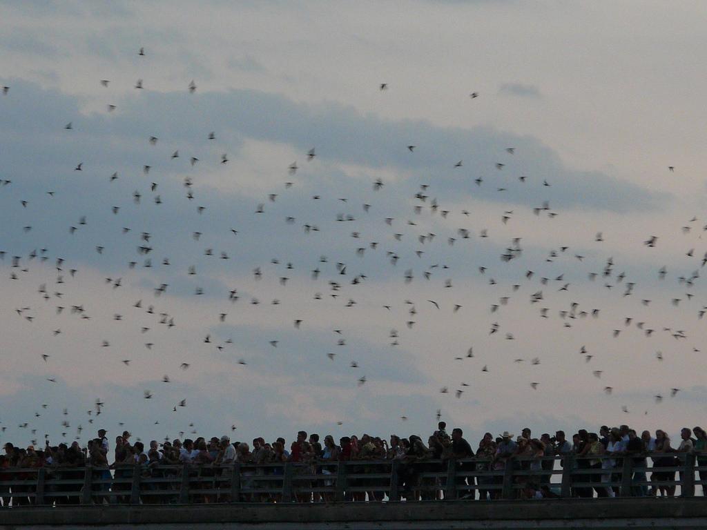 Bats .jpg