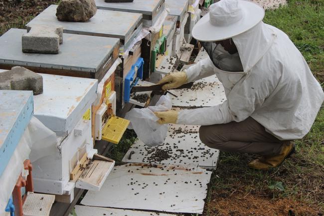 Yağan çamurlu yağmur nedeniyle milyonlarca arı öldü
