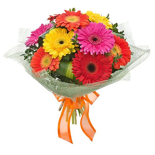 Celebrate A Birthday With Colourful Gerberas