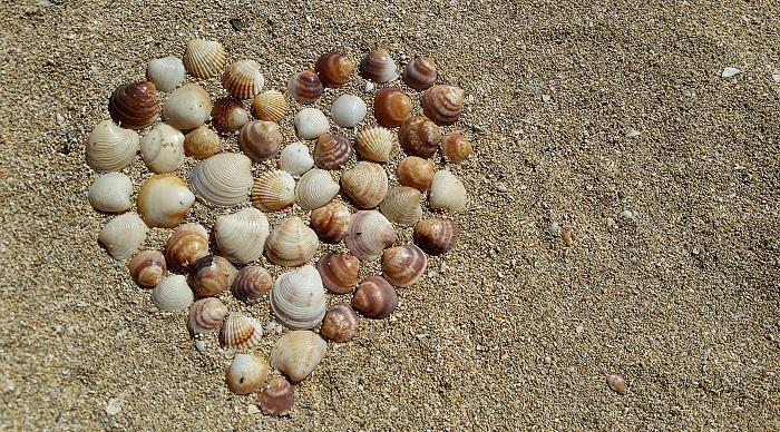 conchas-corazon.jpg
