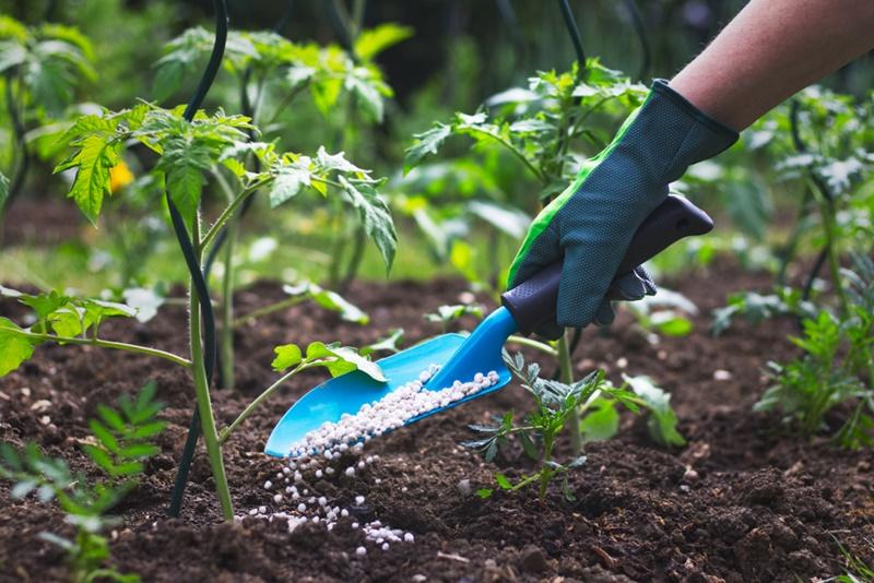 De acordo com relatório da Anda, o aumento mais expressivo foi na entrega dos fertilizantes NPK para o consumidor final. (Fonte: Shutterstock)fertilizante em produção