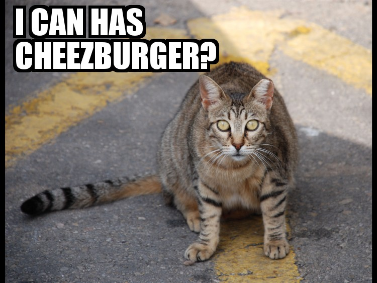 I_can_has_cheezburger.jpg