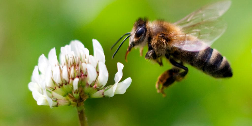 Honey Bees Are Contaminated With Pesticides, Study Says | Time