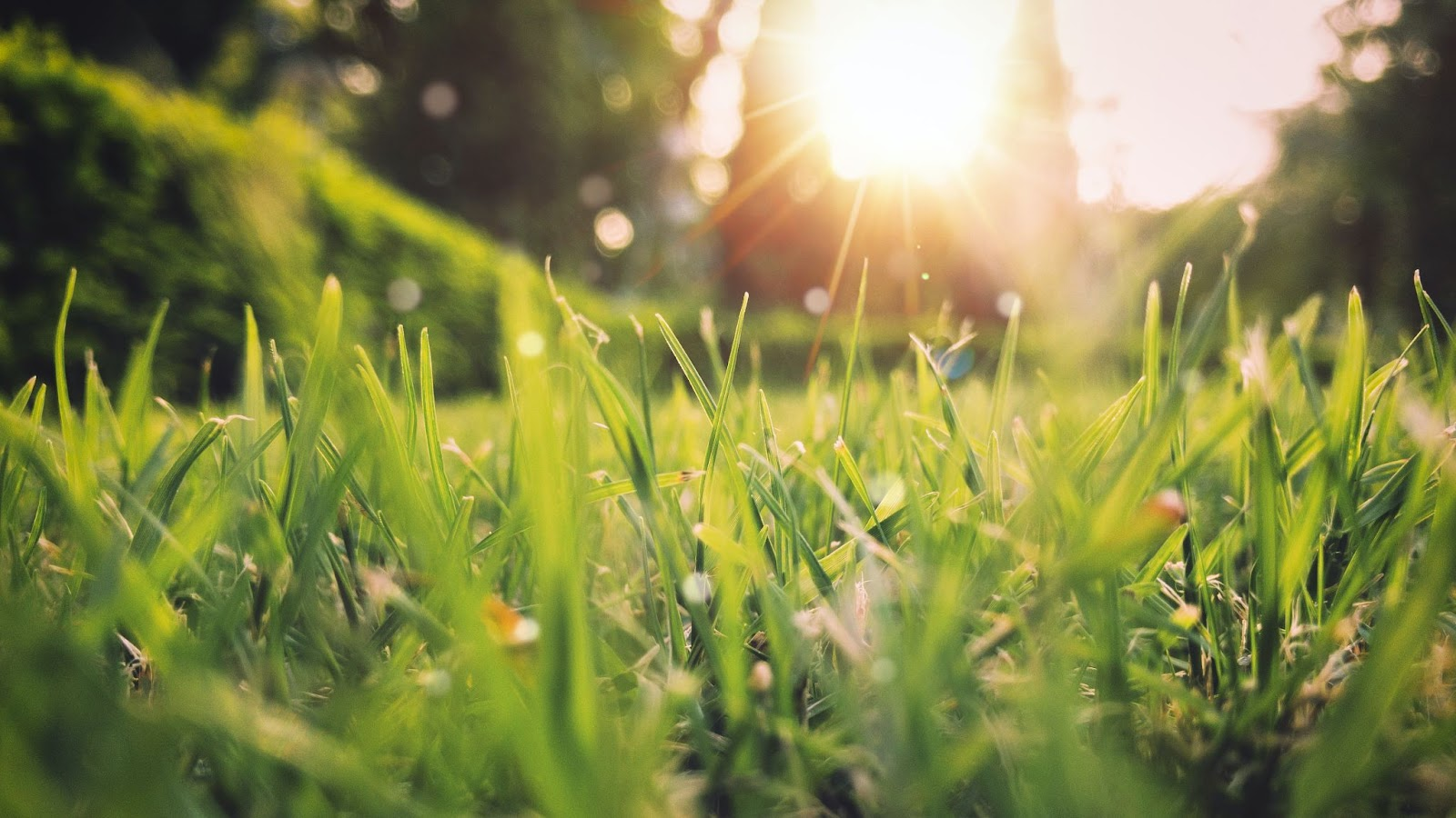 Minneapolis Spring Lawn Care Landscaping