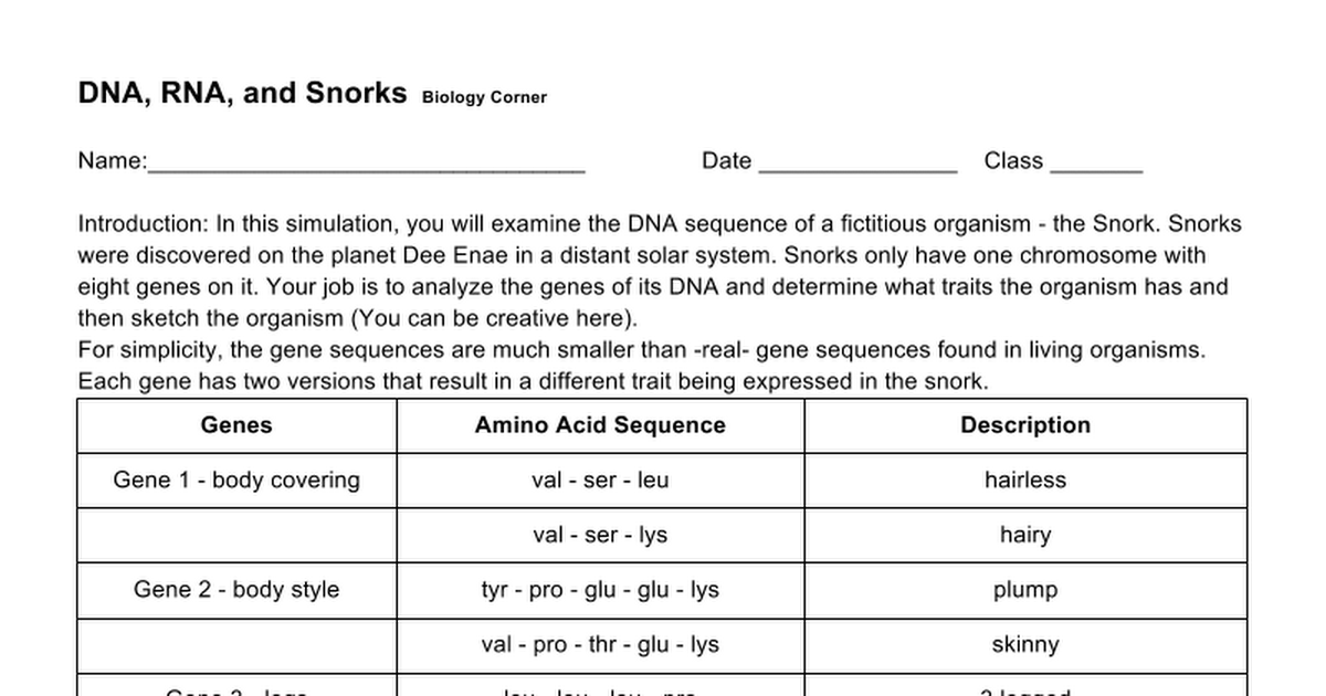 DNA RNA and Snorks Google Docs – Dna and Rna Worksheet