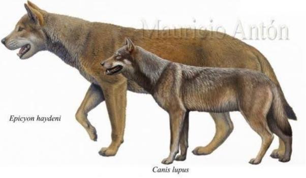se-descubre-un-cachorro-lobo-congelado-18.000-años-rusia-calentamiento-global-
