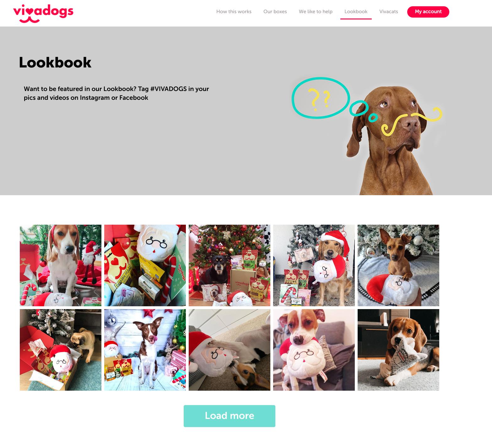 Vivadogs Lookbook Instagram feed directly to website