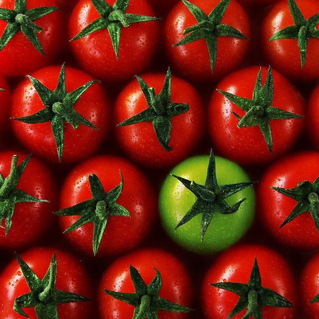 Tomates vermelhos, e um tomate verde