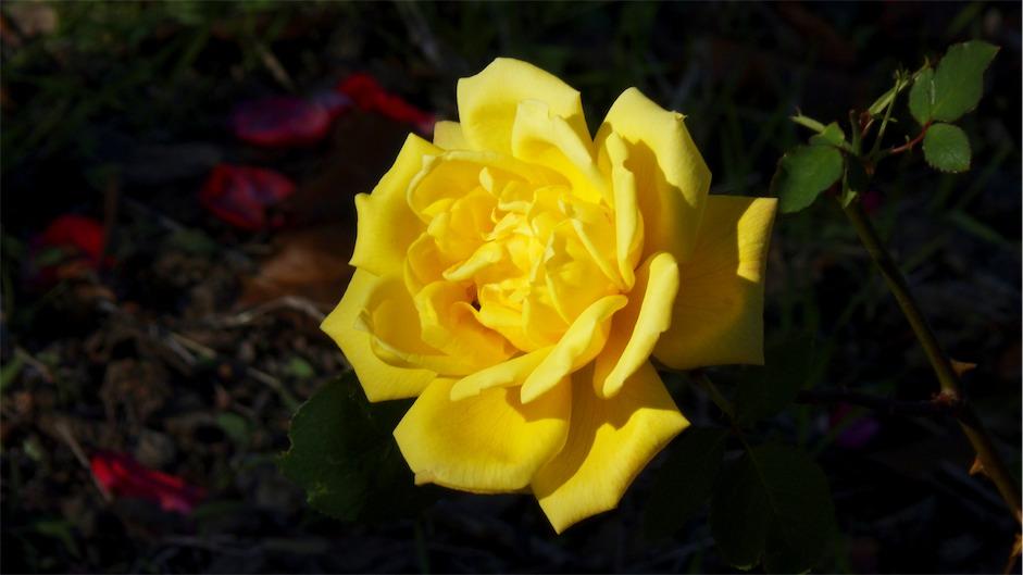 Sunny Yellow.jpg
