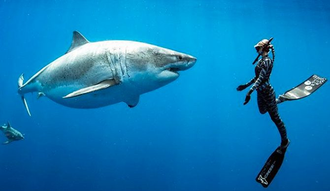 Image result for ocean ramsey