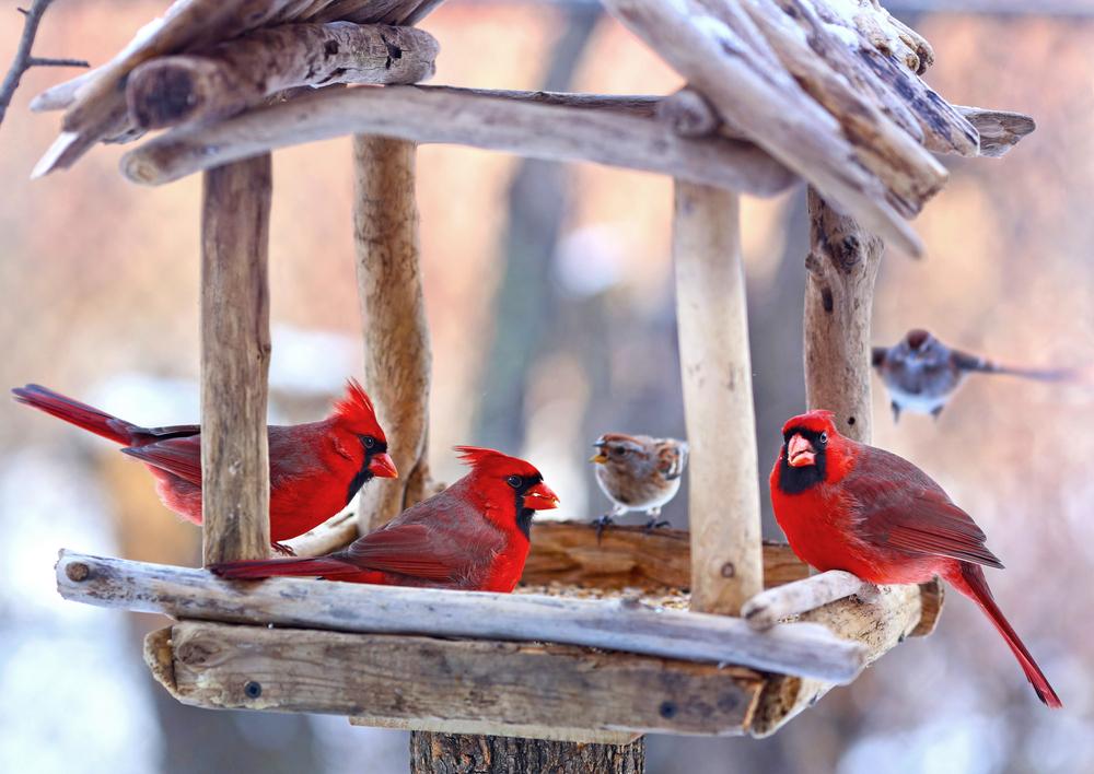 В ухоженной и наполненной кормушке всегда много красивых и счастливых птиц.