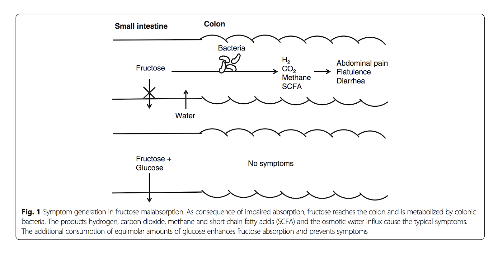 Image taken from: Fructose malabsorption