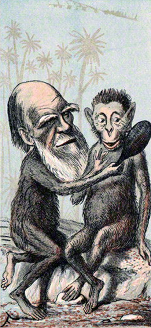 Satirical cartoon of Darwin as a monkey.
