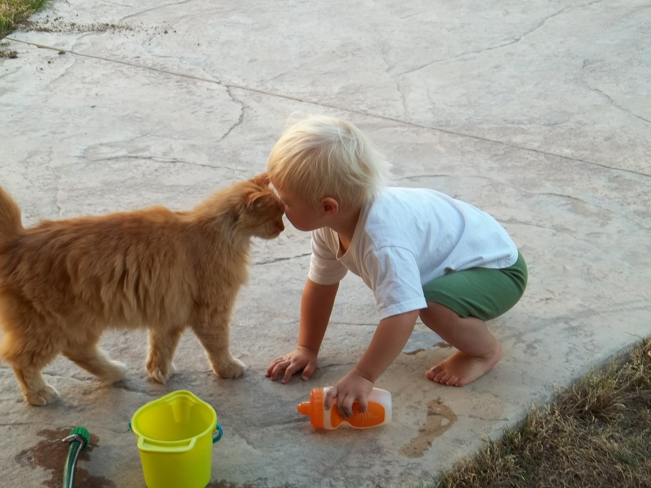 cat and boy.jpg