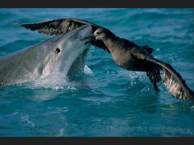 Image result for tiger shark feeding