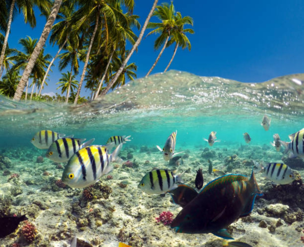 When Is The Best Time To Visit Bora Island